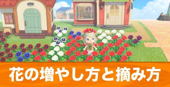 花の増やし方と摘み方