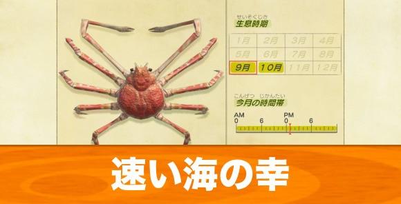 速い海の幸の捕まえ方と種類一覧|値段ランキング