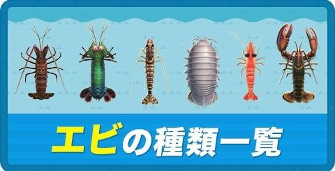 エビの種類一覧と捕まえ方