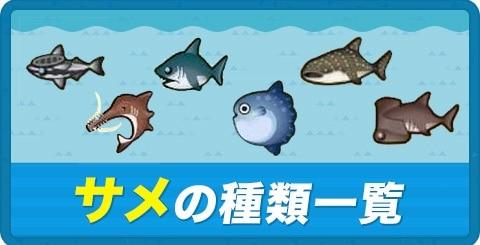 サメの種類一覧と値段|背びれがある魚