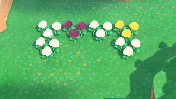 白と黄色のバラの交配