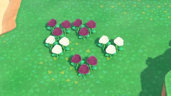 紫と白のバラの交配