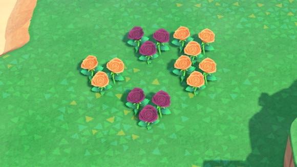 紫とオレンジのバラの交配