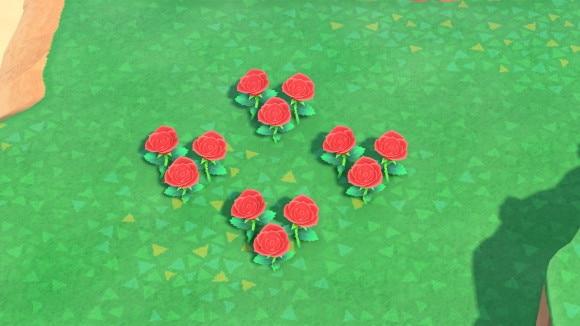 赤のバラの交配