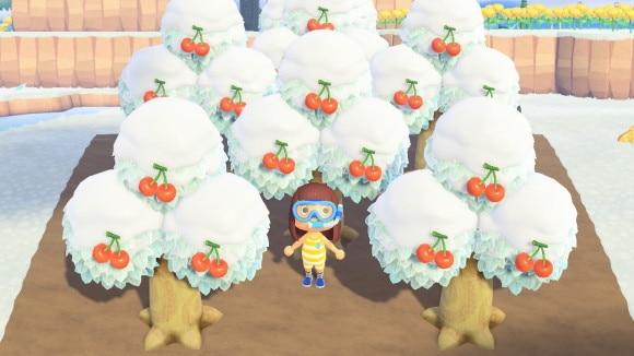 木の植え方