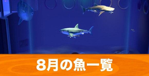 8月の魚一覧