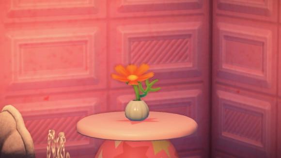 オレンジコスモス飾る