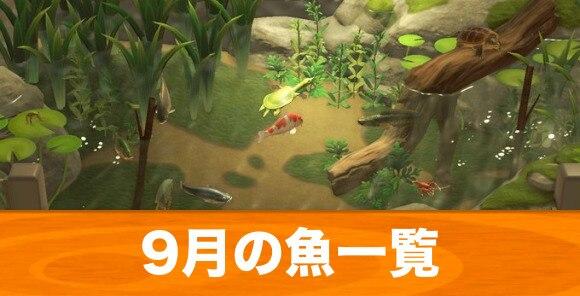 9月の魚一覧|値段と入手場所