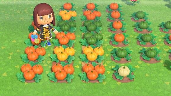 かぼちゃ一覧
