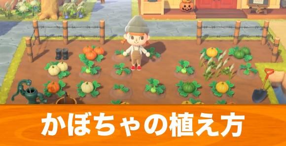 かぼちゃの植え方とレシピの入手方法丨ハロウィン家具一覧