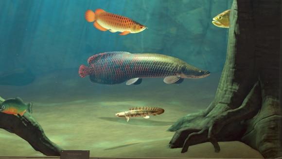 12月の魚一覧