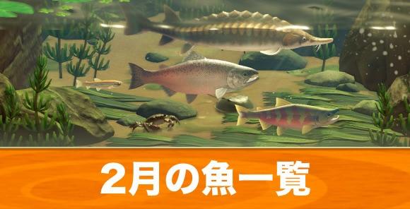 2月の魚一覧