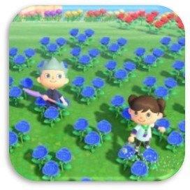花の増やし方