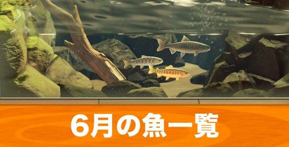 6月の魚一覧