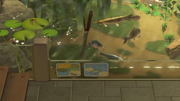 7月の魚一覧
