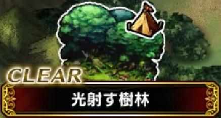 光射す樹林