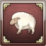 遊牧民の羊