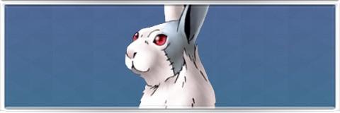 イナバシロウサギの最新評価とスキル